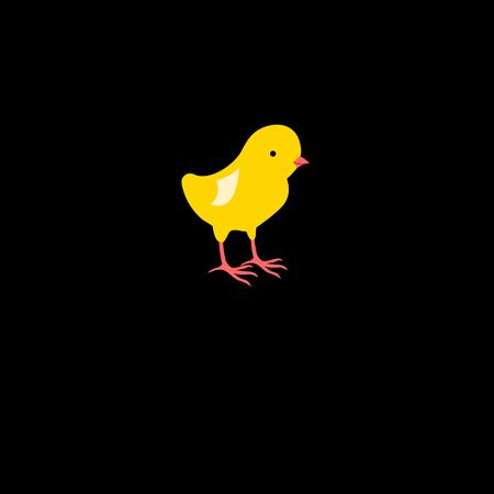 chick: Vector illustration of icon beautiful yellow chick Illustration