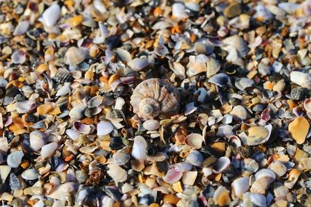 fragments: Beautiful texture of fragments of marine shells