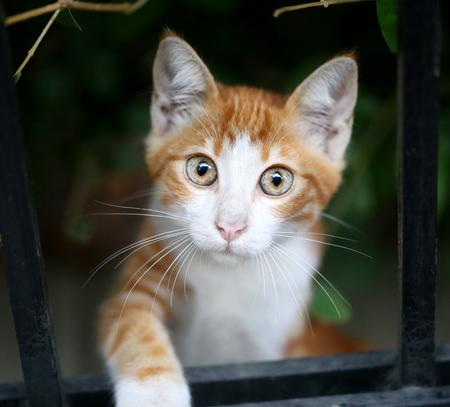 round eyes: Beautiful red cat looks big round eyes