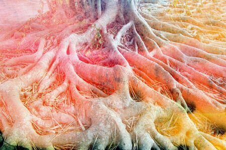 Beautiful watercolor unusual retro roots of the tree