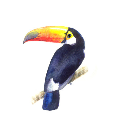 sully: Bright watercolor Toucan bird on white background Stock Photo