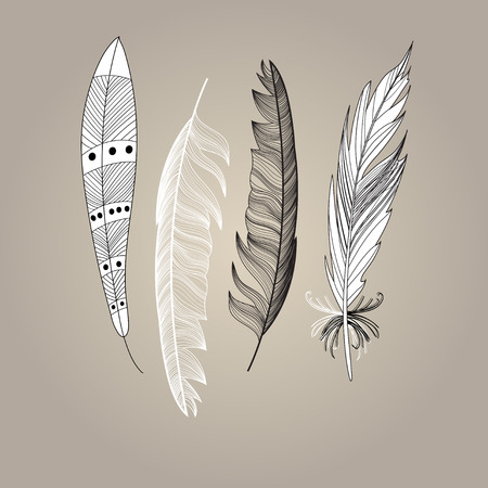 bird feathers: Graphic beautiful set of bird feathers on a brown background. Vector illustration for design