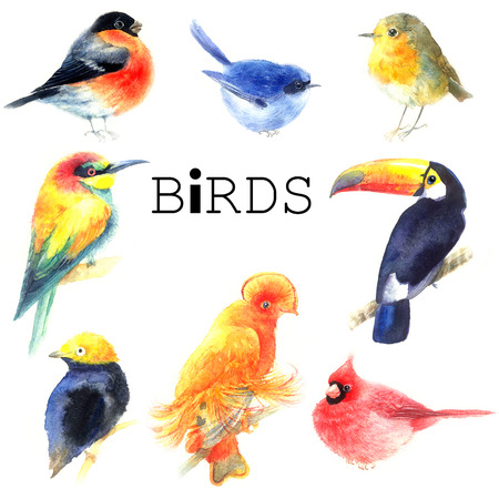 Collection watercolor a variety of birds isolated on white background
