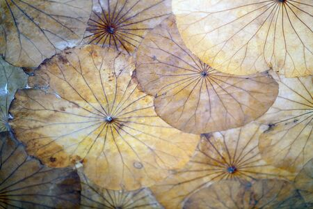 wall decor: Photo of retro wall decor with leaves
