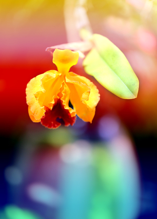 Retro photo of yellow orchids on a tropical island Stock Photo