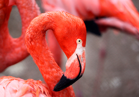 Photos beautiful red flamingo in a park Stock Photo
