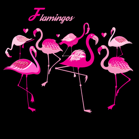 Vector group of flamingos on a dark background Illustration