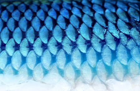魚の美しい背景フラグメントの写真のスケールします。