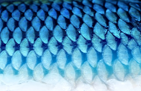Photo of a beautiful background fragment of fish scales
