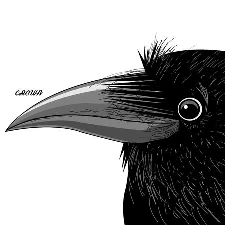 Vector Porträt eines schwarzen Raben auf einem weißen Hintergrund