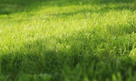 Bright beautiful photo green sunlit grass spring