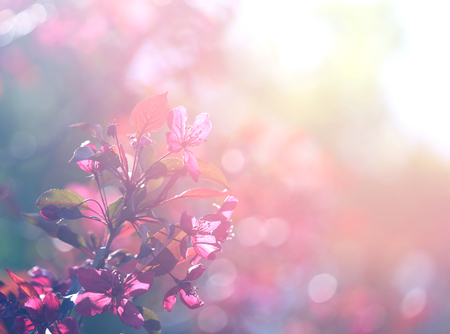 Photo of a sunlit spring blooming branch