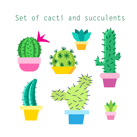 Vector set of different cacti and succulents on white background