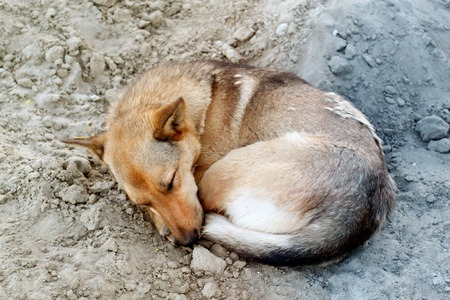 Photo of a funny sleeping dog in the sand Stock Photo