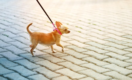 Photo funny a little dog walking along the road