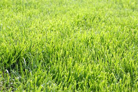 夏の写真明るい緑の細い草
