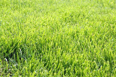 Photo bright green thin grass in the summer