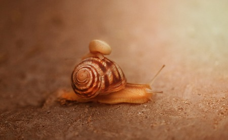 Bright photo of a macro snail crawling along the road after a rain Stok Fotoğraf
