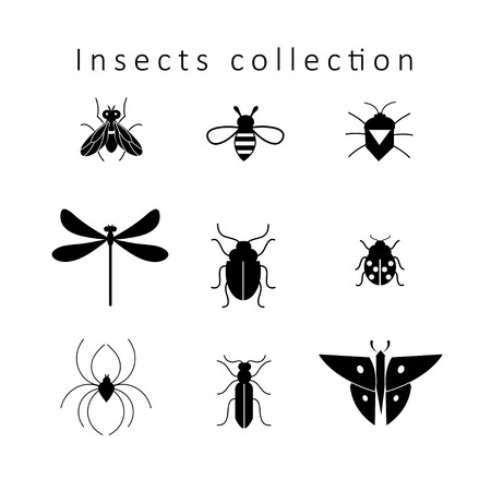 Set of different insects isolated on white
