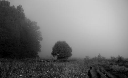 Photo d & # 39 ; un champ avec des arbres Banque d'images - 84209452