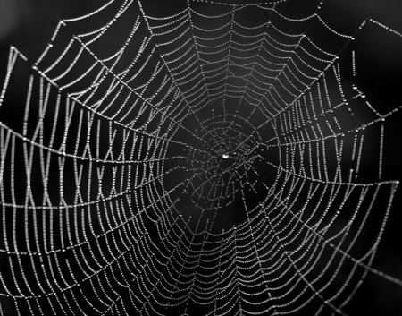 Photo of a beautiful web with drops of water