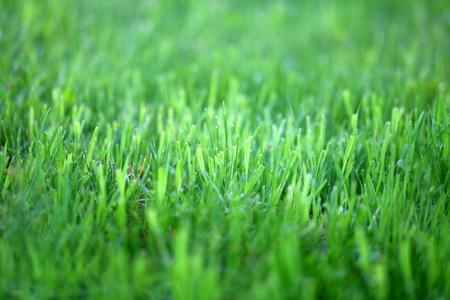 Bright green grass Reklamní fotografie
