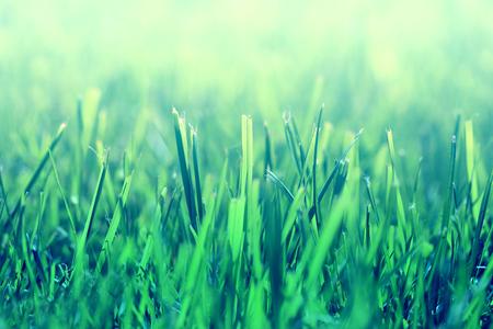 明るい緑の草 写真素材 - 84209476