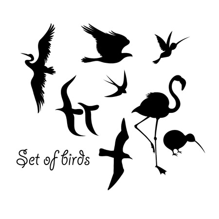 Set of silhouettes of birds symbols.