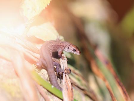 Foto van een grappige kleine hagedis die in de zon zonnebaadt