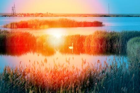 Foto van een meerlandschap met een zwaan bij zonsondergang