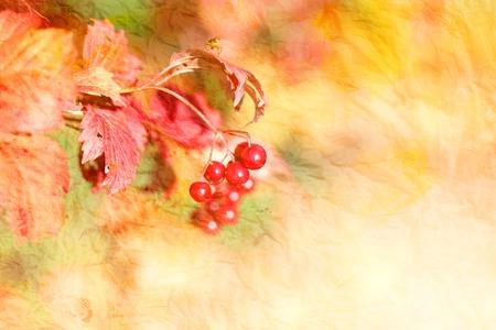 Photo retro autumnal background macro with large viburnum Stock Photo