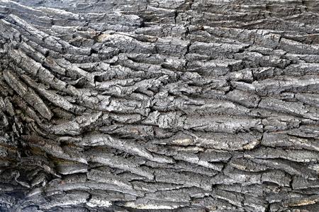 マクロの背景の写真美しい古い木の質感 写真素材