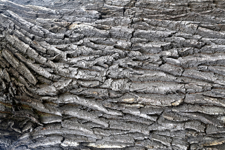 Photo macro background beautiful old tree texture 版權商用圖片