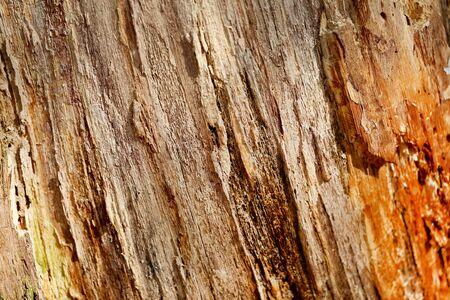 Photo macro background beautiful old tree texture Фото со стока