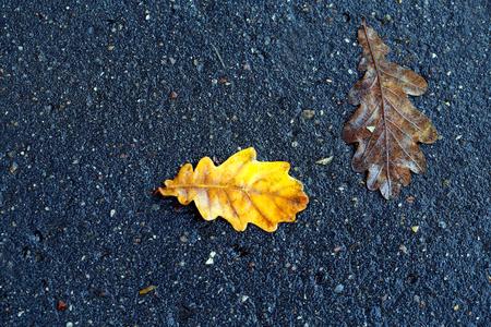 Macro beautiful photo of an oak leaf on the asphalt
