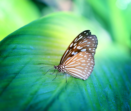 Bright photo of a butterfly exotic illuminated by the sun on a background of foliage Stock Photo