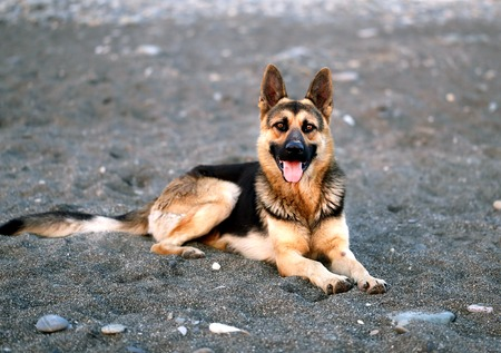 Photo of a beautiful big dog Stock Photo