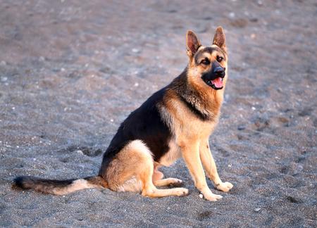 Photo of a beautiful big dog Фото со стока