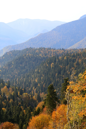 Great photos of snowy mountains and autumn forest Sunny bright day at altitude