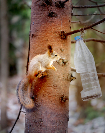 Vivid photo macro funny furry squirrel on pine tree Stock Photo