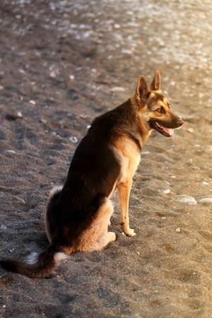 Photo of a beautiful big dog on a sandy beach