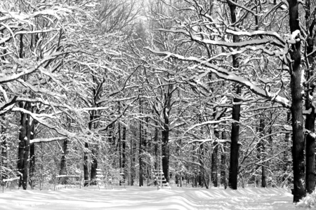 Photo of a winter snow-covered wonderful forest