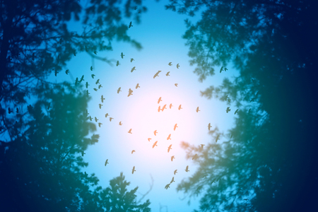 Photo flight of a flock of birds in the sky in the evening