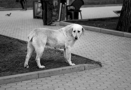 Photo of a big funny dog in the Park