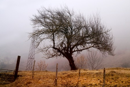 Photo of a large beautiful tree in the fog in the morning Stock Photo