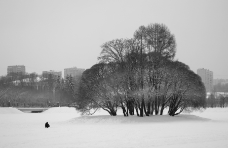Photo contrast winter landscape with trees in the park