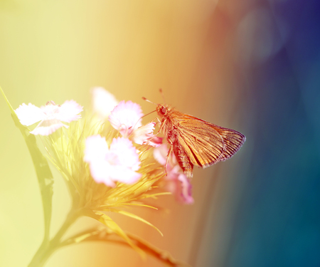Photo of a macro golden butterfly on flowers in the garden