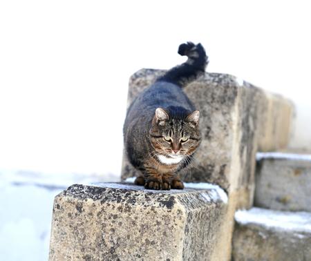 Photo of a beautiful macro furry fat cat lit by the sun