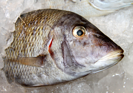 Photo of a macro background of delicious big fish