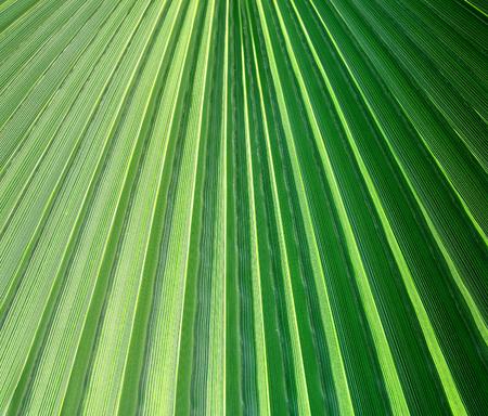 Photo of a macro green tropical leaf lit by the sun Reklamní fotografie